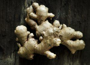 imbir, roślina lecznicza